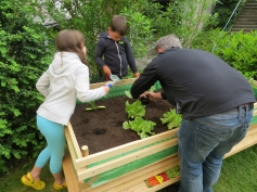 Das Gemüse wird geplanzt / The vegetables are being planted