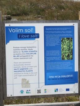 Pflanzen, die Salzwasser mögen / Plants that like salt water