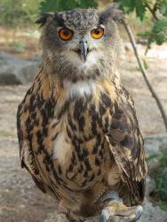 Besuch bei einer Falknerei / Visit to the falconry