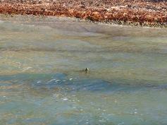 Pfahl im Wasser / Stilt in the water