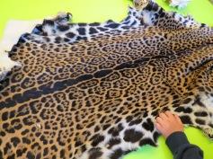 Jaguarfell / Jaguar fur