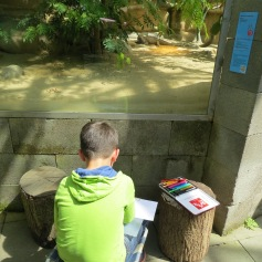 Leguan abzeichnen / Drawing an iguana