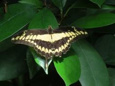 Schöne Schmetterlinge / Beautiful butterflies