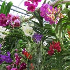 Solche schöne Orchideen / Such beautiful orchids