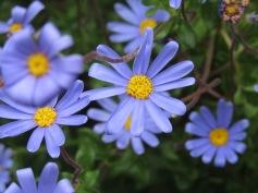 Schnüselis Fotos im Botanischen Garten / Honeybunny's pictures in the Botanical Gardens