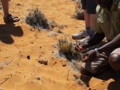 Mit dem Buschmann über die Tiere in der Wüste lernen / Learning about the animals in the desert from a bushman