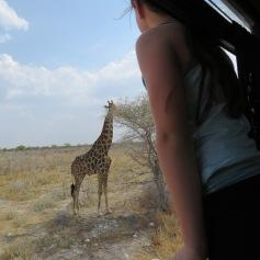 Eine Giraffe! Ganz nah! / A giraffe! Very close!