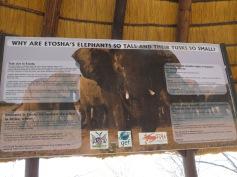 Wissenswertes über den Etosha Nationalpark / Interesting facts about Etosha national park