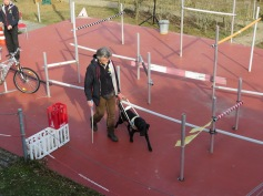 Sicher führt der Labrador seinen Trainer durch den Parkour / The Labrador safely guides his trainer through the obstacle course