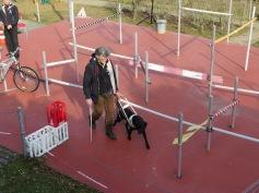 Sicher führt der Labrador seinen Trainer durch den Parkour / The Labrador safely guides his trainer through the obstacle course