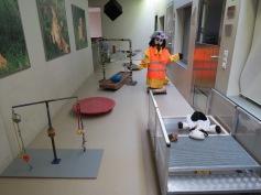Welpenschule / Puppy school